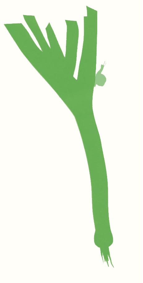 Bioco Illustration Lauch mit Schnecke, von Selina Kallen
